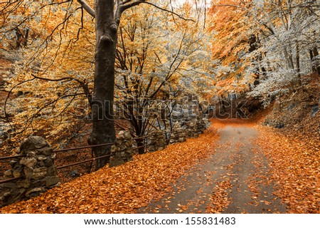 autumn season, colors and shades of nature at the Park of Campo dei Fiori Varese
