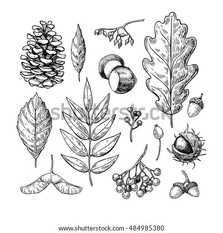Oak Leaf And Acorn Drawing Seamless Vector Patter...