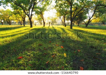 autumn shadows - stock photo