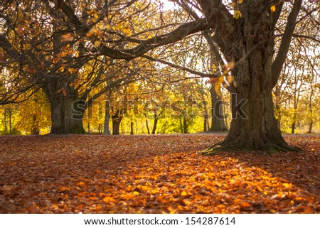 Autumn shot of a park with trees and covered in fallen leaves ground