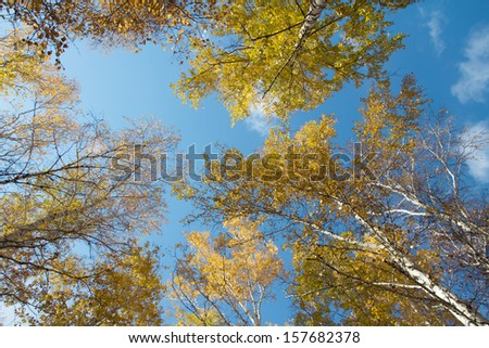 Autumn sky in birch forest with wide angle lens - stock photo