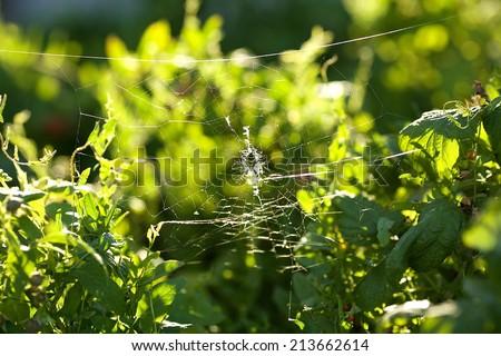 autumn spiderweb brightness before sunset - stock photo