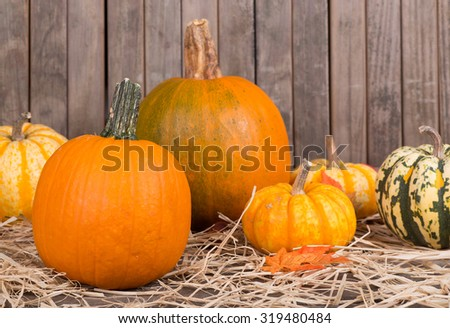 Autumn squash and pumpkins on a wood background - stock photo