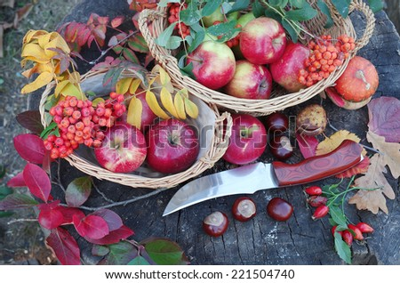 Autumn still life. Apples, knife, fruits and leaves. - stock photo