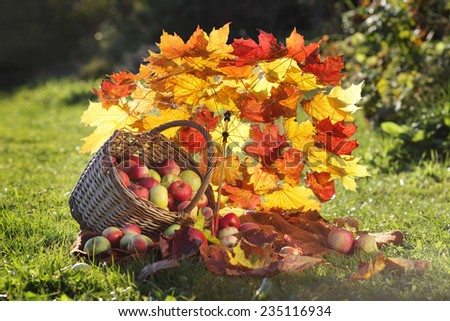 autumn still life with apples, basket and umbrella of maple leaves - stock photo