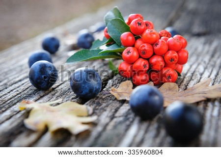 Autumn still life with blackthorn berries and rowanberry - stock photo