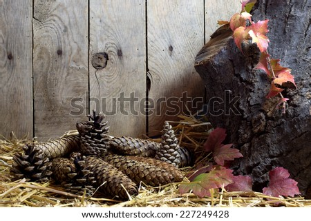 Autumn Still Life with Pine Cones  and Autumn Leaves on a Hay, Vintage Wooden Planks  Background  - stock photo
