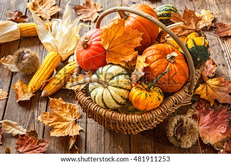 Autumn still life with pumpkins, corncobs and leaves on wooden background