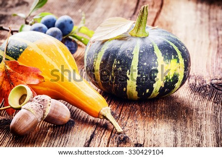 Autumn still-life with pumpkins on wooden background. Copy space - stock photo