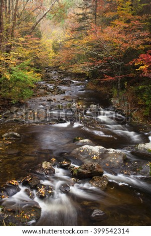 Autumn stream in the woods