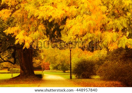 Autumn sunny park with orange trees and empty alley , natural seasonal background - stock photo