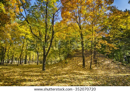 Autumn sunny park with orange trees, natural seasonal background