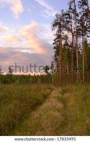 autumn sunset near forest edge - stock photo