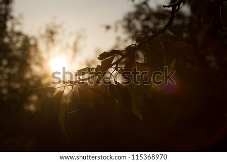 autumn, sunset, sundown, brunch, tree, garden, dark - stock photo