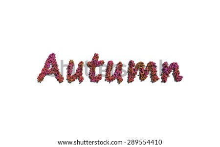 Autumn text flower with white background concept of typography - stock photo