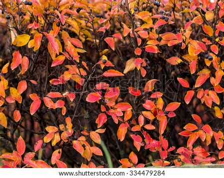 Autumn texture of bright leaves.
