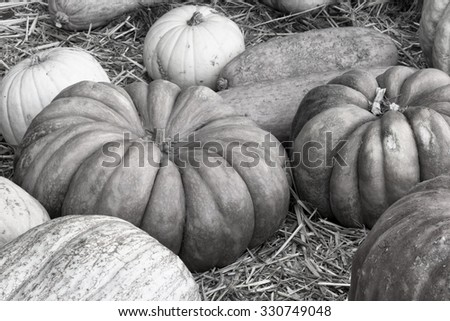 Autumn, Thanksgiving, Halloween Pumpkins in Black and White - stock photo