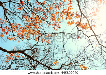 Autumn tree branch background.Retro color style.
