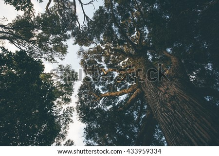 Autumn tree branch background, Vintage color style. - stock photo