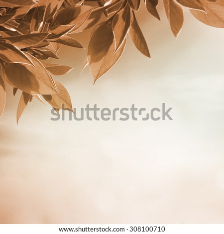 Autumn tree branch on the sunny background