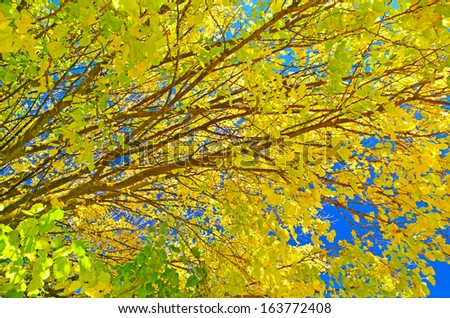 autumn tree branches for background - yellow leaves blue sky