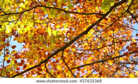 Autumn tree branches positive colorful