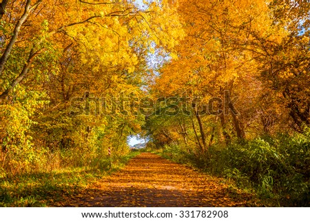 Autumn tree by a path on a sunny day