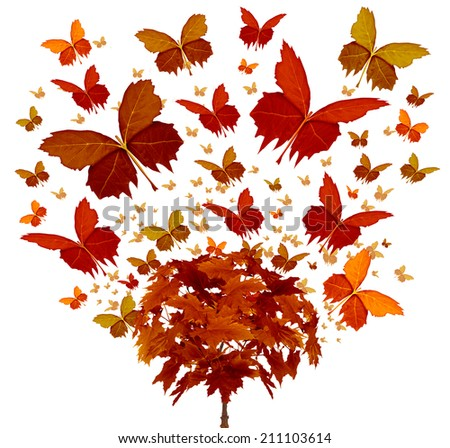 Autumn tree concept with magical orange and yellow seasonal leaves flying in the wind transforming into the shape of an open wing butterfly as a symbol of fall celebration and creative freedom. - stock photo