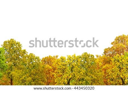 autumn tree forest isolated on white background - stock photo