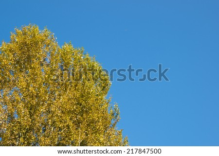 autumn tree in a sunny day - stock photo