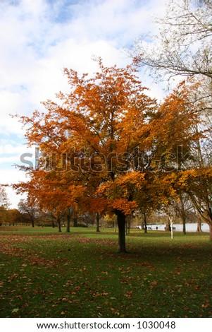 Autumn Tree in Hyde Park, London - stock photo
