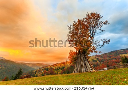 Autumn tree in mountain Carpathian, Romania - stock photo