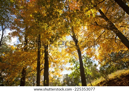 Autumn tree in nature
