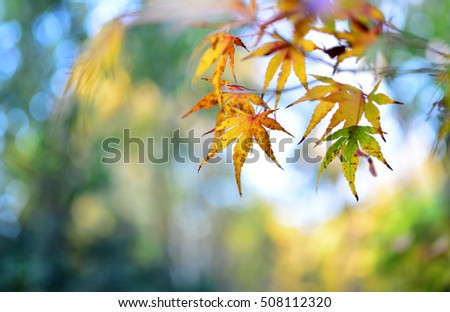autumn tree leaf nature abstract detail background