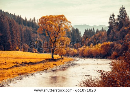 Autumn tree near mountain river. Hills in haze on horizon