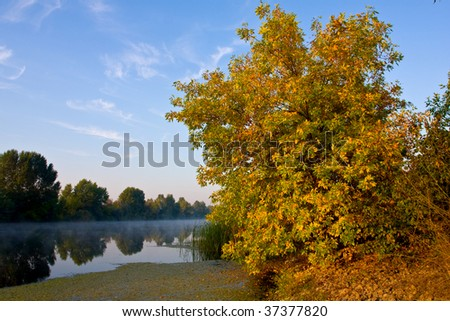 Autumn tree near river