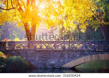 Autumn tree near the bridge in park. Sunlight between the yellow leaves