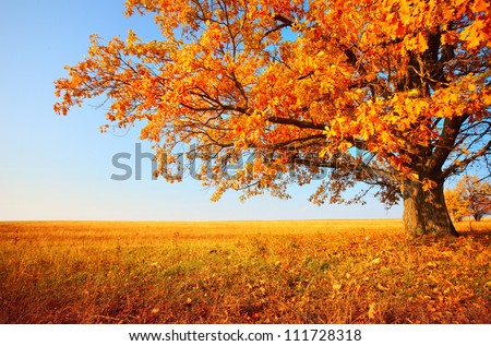 Autumn tree on dry meadow over blue sky background - stock photo