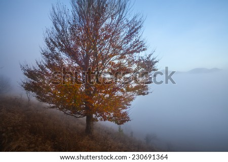 Autumn tree on dry meadow over blue sky background.