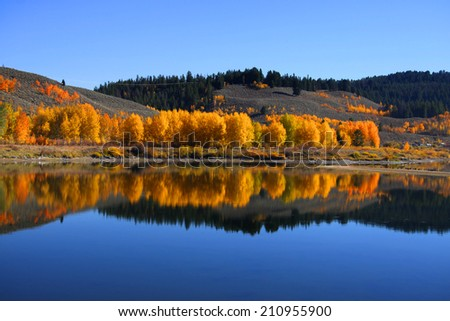 Autumn tree reflections in Grand Tetons national park