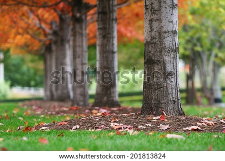 Autumn tree trunks with colorful leaves at Millennium park in Chicago, US - stock photo