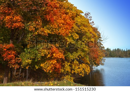 Autumn tree with bright foliage is reflected in the lake  - stock photo