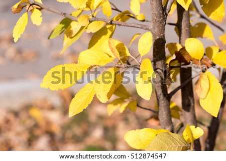 Autumn. Tree with yellow leaves