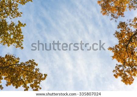 Autumn trees and blue sky - stock photo