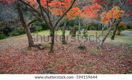 Autumn trees at the Arashiyama Park in Kyoto, Japan. Arashiyama is Kyoto second-most important sightseeing district.