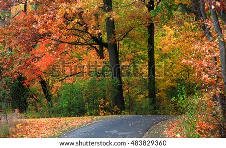 Autumn trees in a park and bike trail
