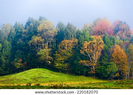 Autumn trees in early morning fog, Stowe, Vermont, USA - stock photo