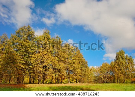 autumn trees in summer day