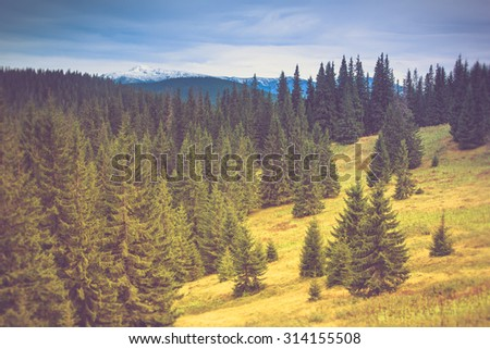 Autumn trees in the forest and snow-covered mountain in the distance. Filtered image:cross processed vintage effect. - stock photo