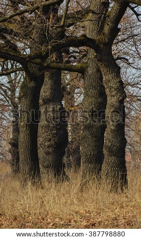 Autumn trees in the forest. Fall in the oak tree forest. Forest landscape - stock photo